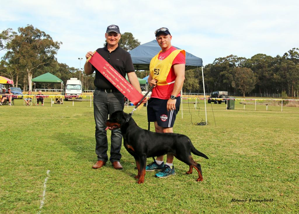 The Northern Districts Rottweiler Club of NSW, Rottweiler Club of NSW, Northern Districts Rottweiler Club, Rottweiler Club, Rottweiler, NDRC